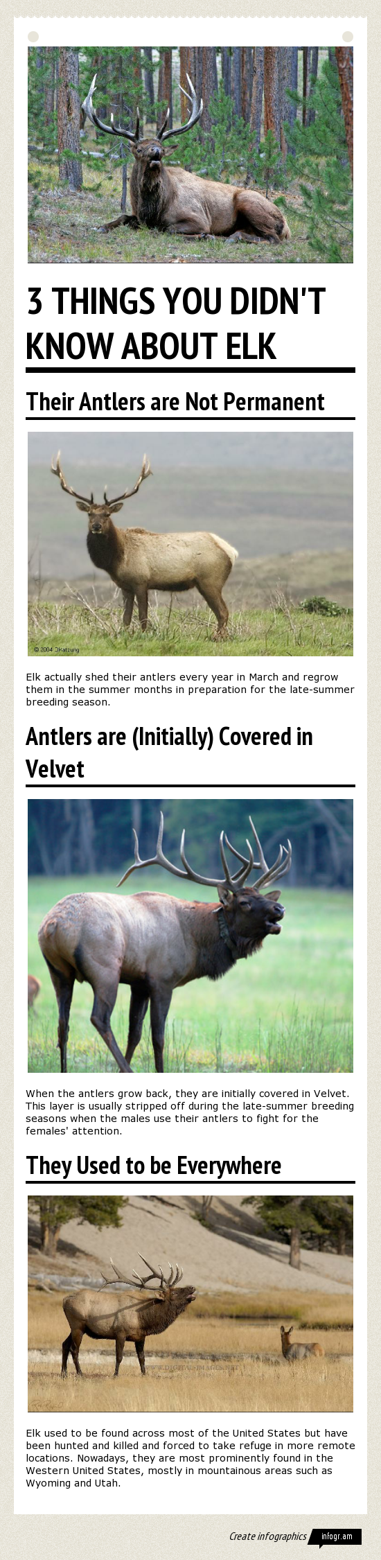 3 Things You Didn't Know About Elk