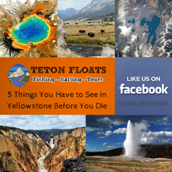 5 Things You Have to See in Yellowstone