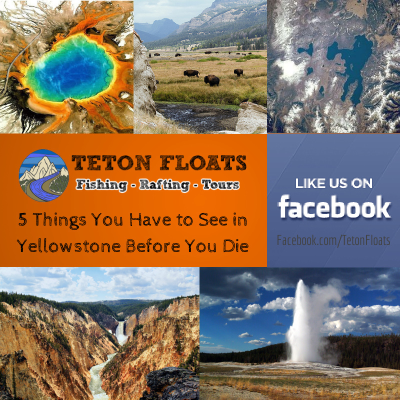 Places In The United States To See Before You Die: 5 Things You Have To See In Yellowstone Before You Die